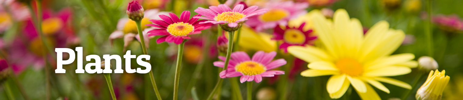Lifetime Plant Guarantee