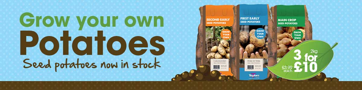 Grow your own... Seed Potatoes - now in stock