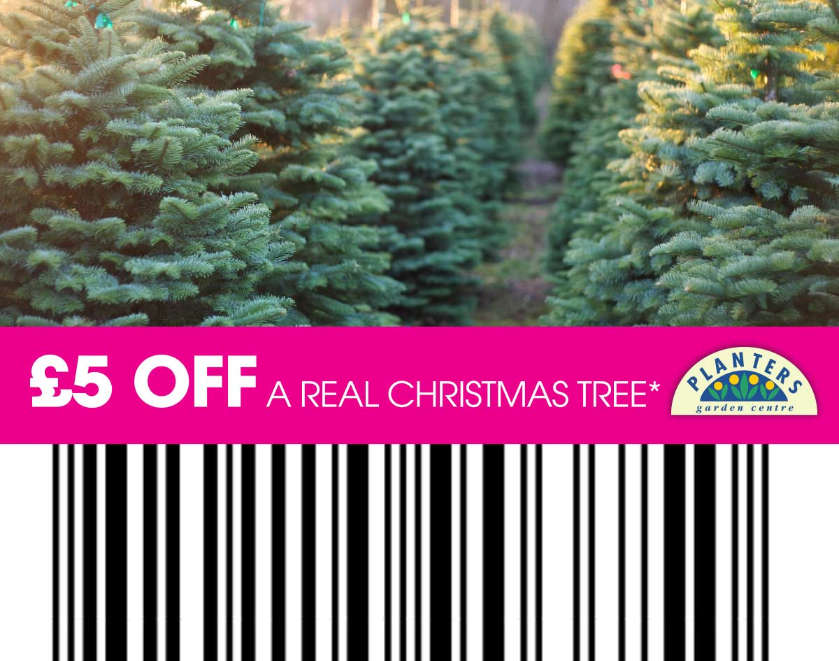 £5 off a real Christmas tree with this voucher
